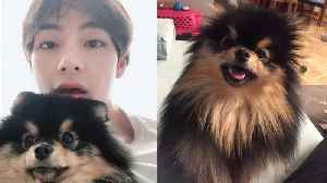 BTS' V FINALLY Reunites With His Dog Yeontan & Fans REJOICE! [Video]