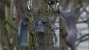 Video shows squirrel's playing 'Jack in the box' [Video]