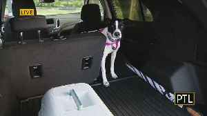 Dog Week: Dog Safety In Cars [Video]