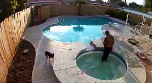 Man Jumps in Hot Tub to Save French Bulldog [Video]