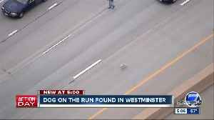 Is this your dog? Pup that got loose on Westminster highway found safe [Video]