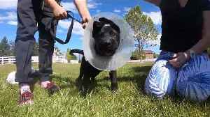 Utah Woman Tortured Puppy for Days to `Keep the Dog Quiet,` Police Say [Video]
