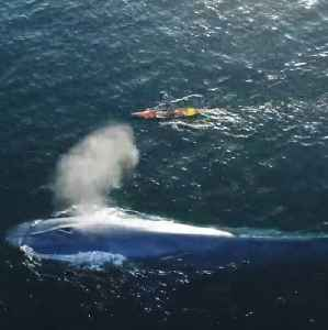This paddle boarder had an incredible encounter with a whale [Video]