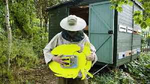 The Beekeeper Making Beats With Bees [Video]