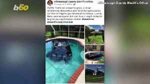 Carpool Chaos! Florida Driver Hits The Gas Instead Of Breaks, Ends Up In Pool! [Video]