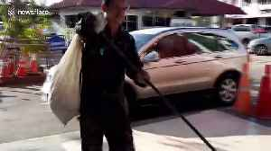Prankster dumps 15-foot-long python at police station where boss is afraid of snakes [Video]