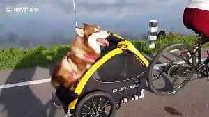 Pampered, lazy husky savors scenic ride in Thailand [Video]