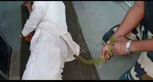 Snake rescued from the shirt of a sleeping man in an Indian hospital, without him waking up! [Video]