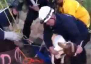 Firefighters Rescue Goat From Drainage Pipe in Oakland, California [Video]