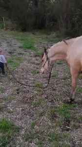 A Little Kid Walking his Baby Horse [Video]