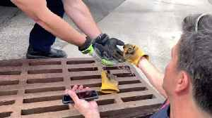 Incredible Moment Firefighter Uses Youtube Video To Rescue Ducklings [Video]