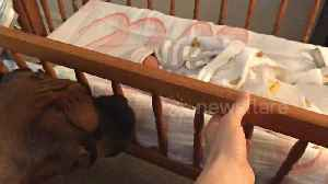 US dog obsessed with newborn baby gently rocks her to sleep [Video]