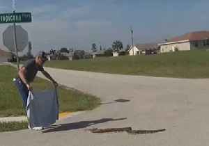 Snake 'Taken Into Custody' After Cape Coral Police Respond to Complaint [Video]
