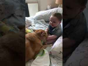 Baby Giggles After Touching Dog's Face [Video]
