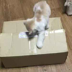 Cat Pulls Another Cat Inside Cardboard Box [Video]