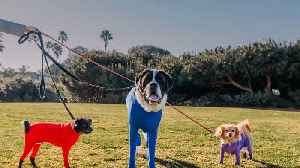 Shed Defender: The Onesie For Your Dog [Video]