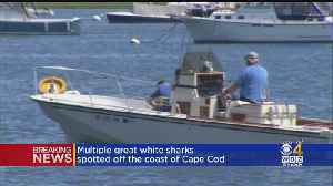 7 Great White Sharks Spotted In Cape Cod Bay [Video]