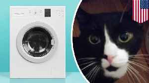 Cat sneaks into washing machine, survives full wash cycle [Video]