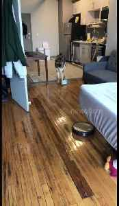 Roomba chases scared German shepherd around Tennessee living room [Video]