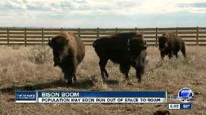 Bison conservation groups in Colorado continue fight to keep animals thriving [Video]