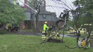 President Teddy Roosevelt's Tree Removed At Sagamore Hill [Video]