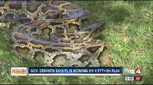 Gov. DeSantis: Florida agencies making plans to remove more pythons from the Everglades [Video]