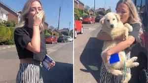 Ecstatic Woman Breaks Out Into Tears Of Happiness After Meeting Dog Adopted From Romania For First Time [Video]