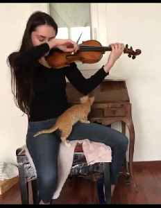 Kitten fascinated by owner's music, gets closer look [Video]