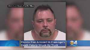 News video: Florida Man Accused In Flamingo's Death At Busch Gardens Fatally Struck By Truck