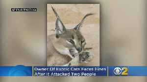 Woman Faces Fines In Caracal Cat Incident [Video]