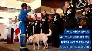 WEB EXTRA: Frida The Rescue Dog Retires [Video]