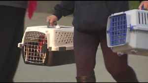 VIDEO 2 plead guilty in relation to Macungie animal cruelty case [Video]