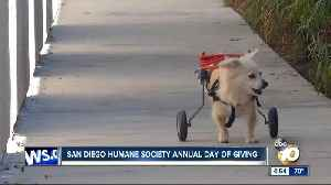 Company picked for MV stadium site/SD Humane Society Day of Giving [Video]