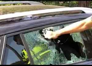 Dutch Police Smash Car Window to Free Dog in Hot Weather [Video]