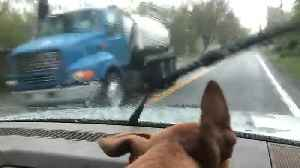 Puppy Chases Windshield Wipers [Video]