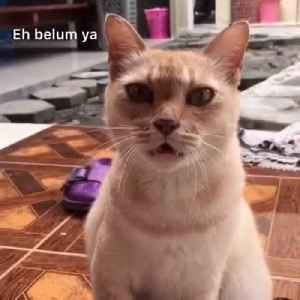 Cat Finishes Song With 'Meow' Following Their Owner [Video]