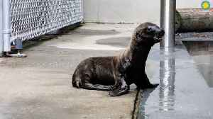 Smithsonian Welcomes Adorable Sea Lion Pup [Video]
