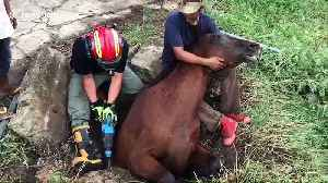 What a mare! Horse rescued after getting stuck in concrete drain for three hours [Video]