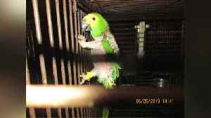 More Than a Dozen Malnourished Parrots Seized from Oklahoma Home [Video]
