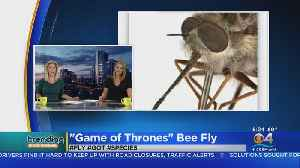 Trending: New Species Of Bee Fly Named After Game Of Thrones Character [Video]