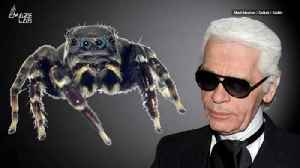 Spider New to Science Named After Fashion Icon Karl Lagerfeld [Video]