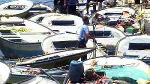 Israeli military ordered to return Palestinian fishing boats following human rights petition [Video]