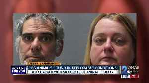 Two arrested for hoarding and abusing over 150 animals at Animal Welfare Society [Video]
