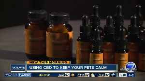 Using CBD to keep your pets calm [Video]