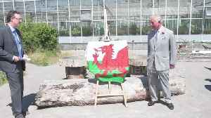 Prince Charles visits the National Botanical Gardens in Wales [Video]