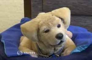 Meet the robot puppy that comforts Alzheimer's and dementia patients [Video]