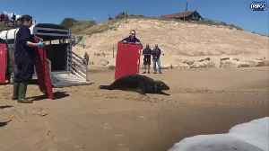 Seal named Sir David Attenborough is released back into the wild [Video]