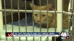 KC Pet Project shelter at 'crisis capacity,' offering $25 adoptions this weekend [Video]