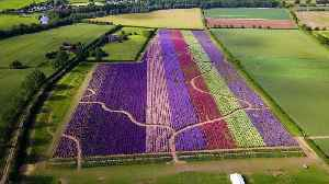 Stunning aerial video show colourful flowers [Video]