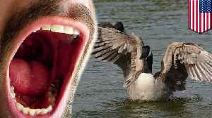 Denver to kill wild geese, donate meat to the needy [Video]